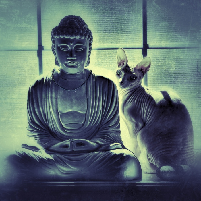 Meditation: the Buddha and the Other Cat - remages