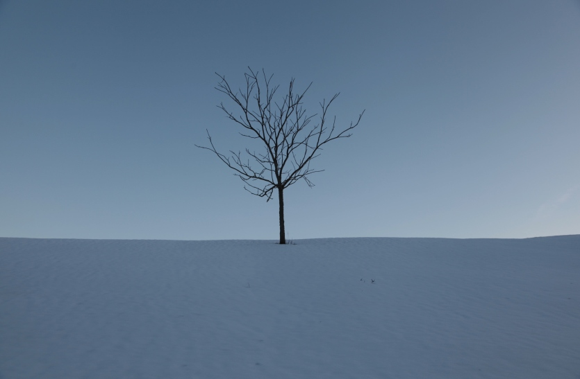 Naked Winter Tree vs. the Polar Vortex. Remages